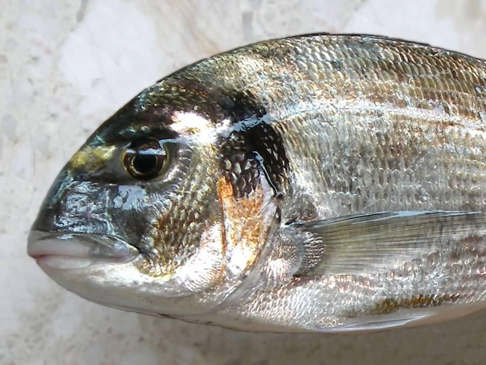 fish-1873595_960_720