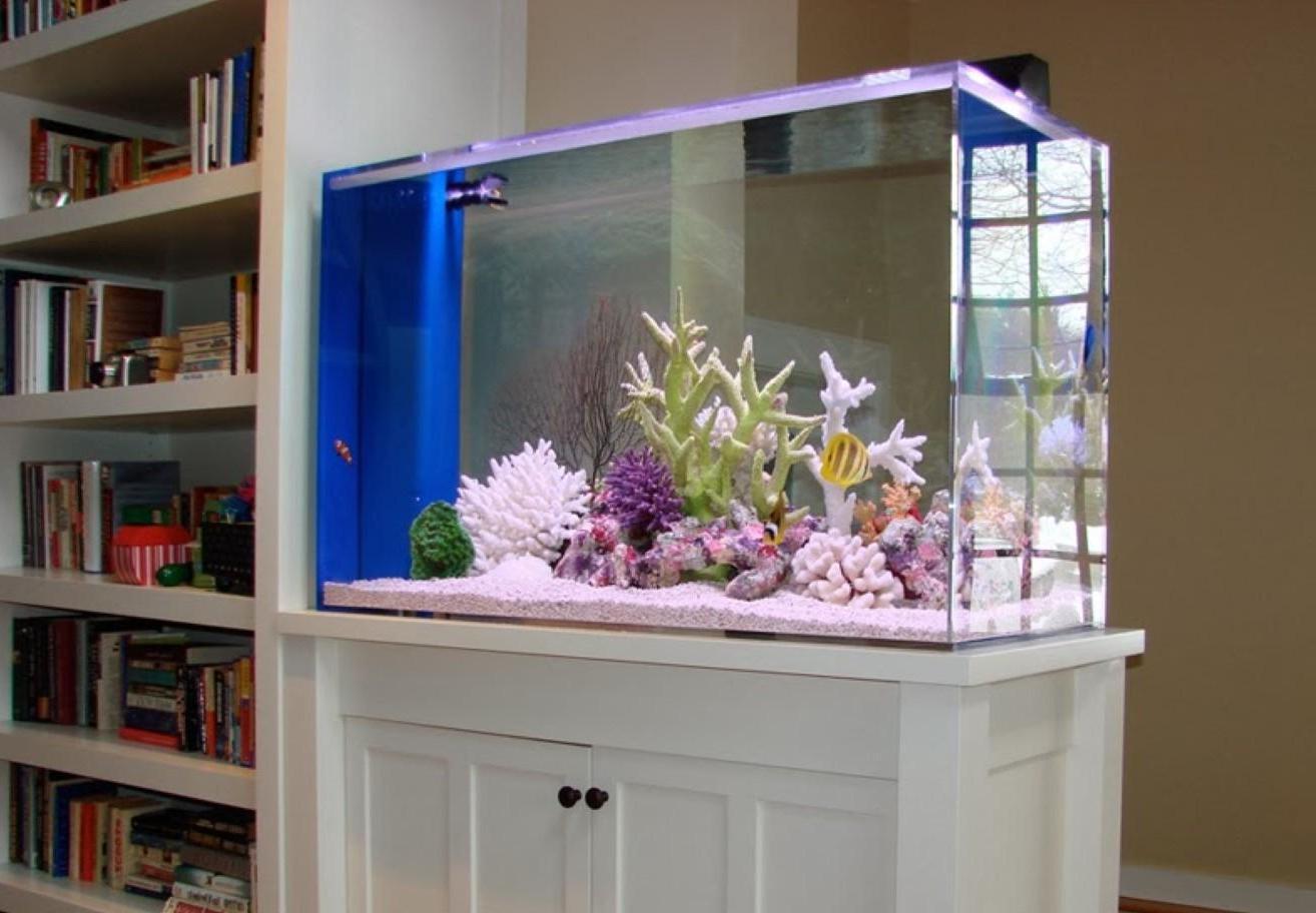 aquariums outreach team worked - 736×510